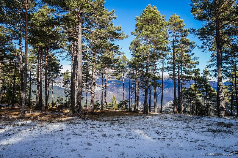 Llegando al primer mirador del Bosc de Palomera