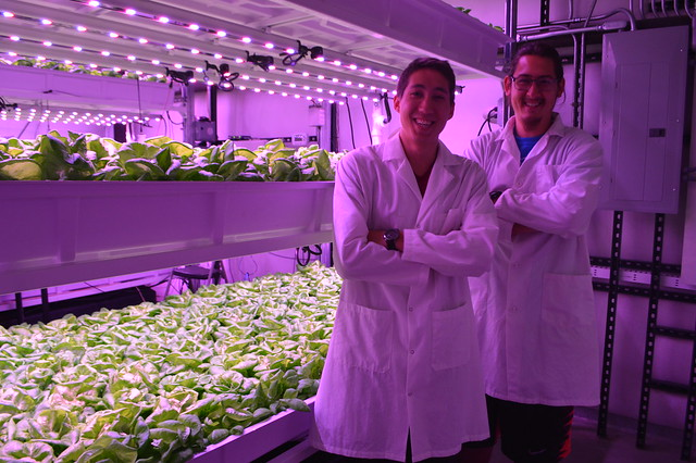 University of Arizona students working in the University of Arizona's Controlled Environment Agriculture Center vertical farming facility