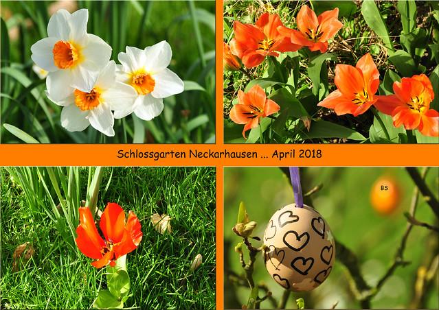 April 2018 ... Schlossgarten Neckarhausen ... Foto: Brigitte Stolle
