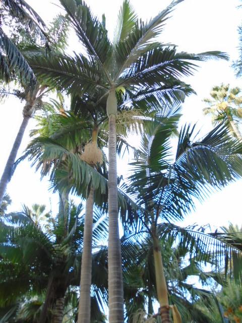 alexandra palm kidsongs