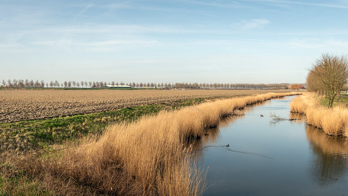 Dutch creek in the spring season - Kreek in het voorjaar | by RuudMorijn-NL