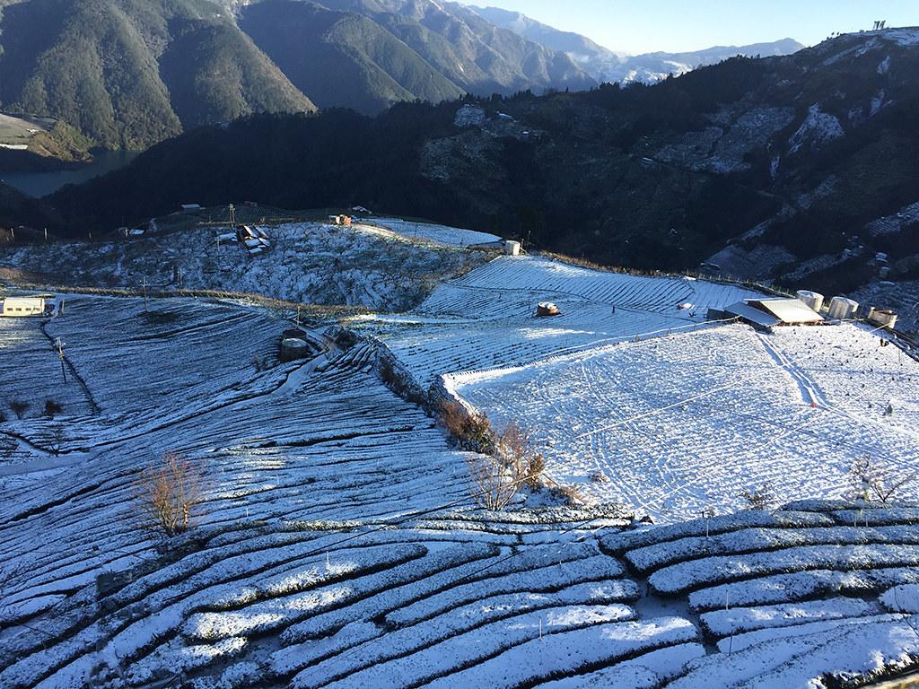 古邁茶園 雪景1