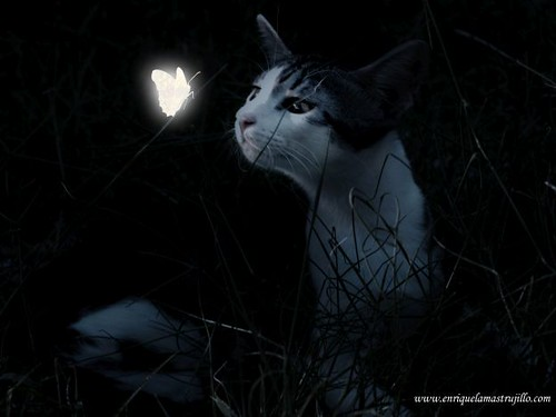 dixi-mariposa-iv-noche-flickr | by Quique