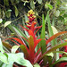 Bromeliad Bloom