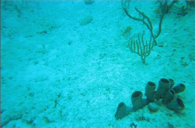 Scuba Diving Near  Lindberg Bay Virgin Island