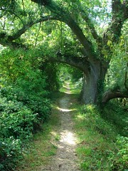 Tree path | by druss101