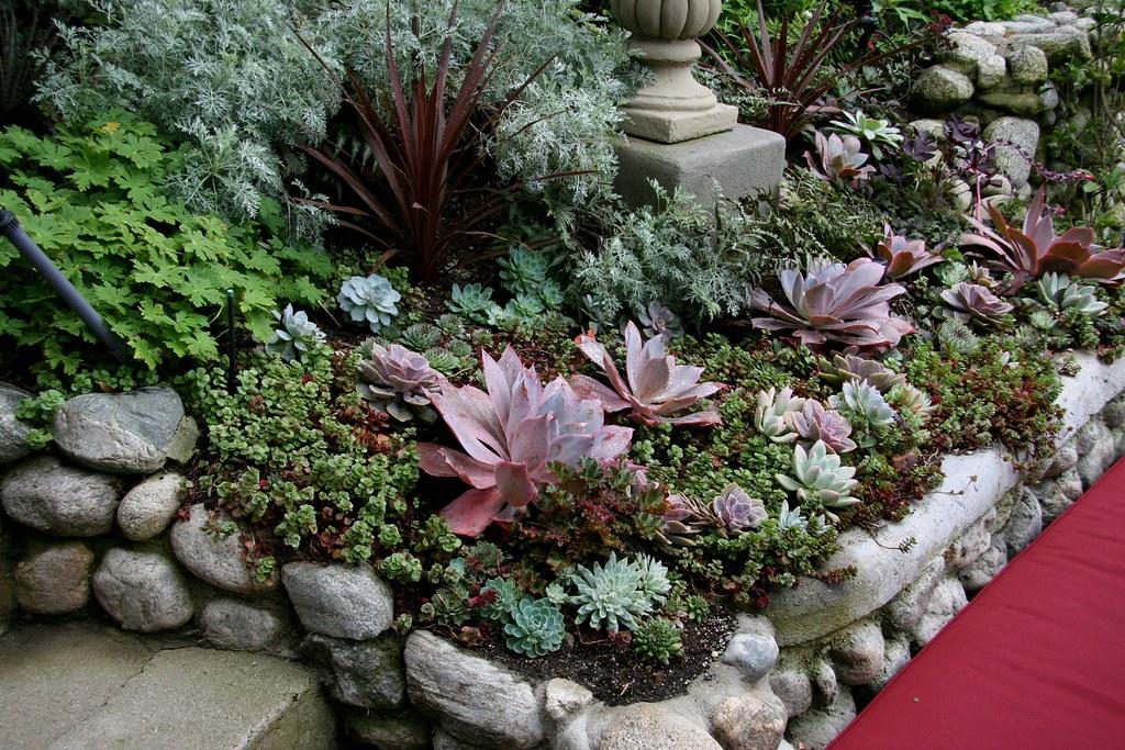 Succulents heather lenkin garden lenkin design lenkin for Decoracion con plantas suculentas