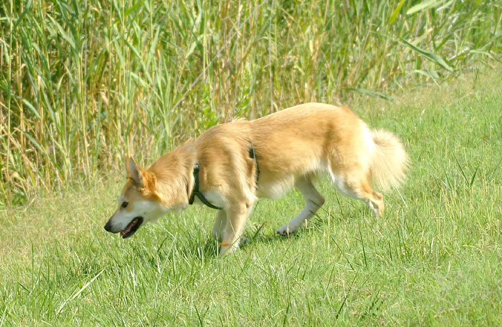 mi perra heura observando los patos dog heura observing flickr