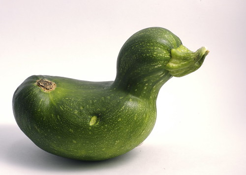 Zucchini Duck | by Alex Galt