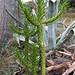 Cactus met agave