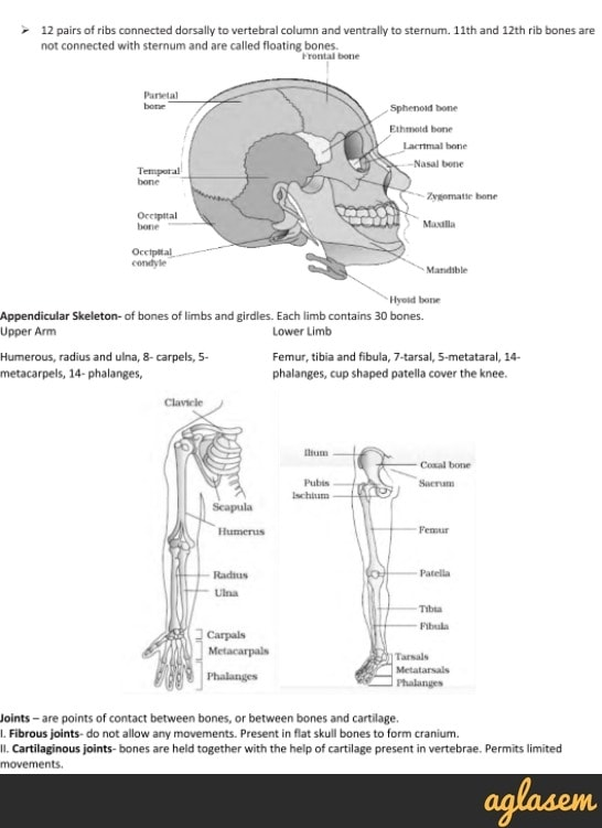 Important Notes of Biology for NEET: Locomotion and Movement
