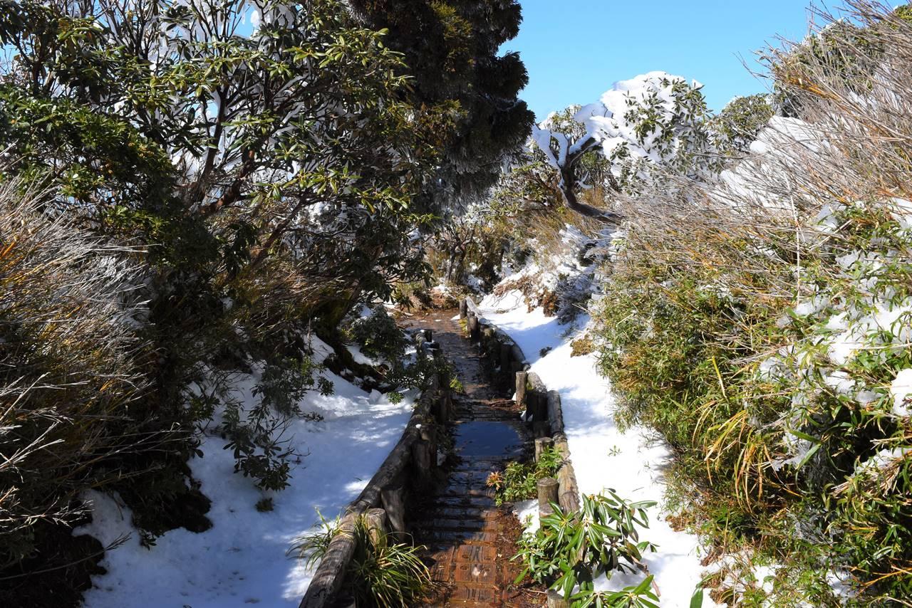 平石岩屋から新高塚小屋への登山道