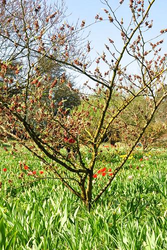 April 2018 - Gartenreisen - Magische Gärten - Schau- und Sichtungsgarten Weinheim an der badischen Weinstraße ... Foto(s): Brigitte Stolle