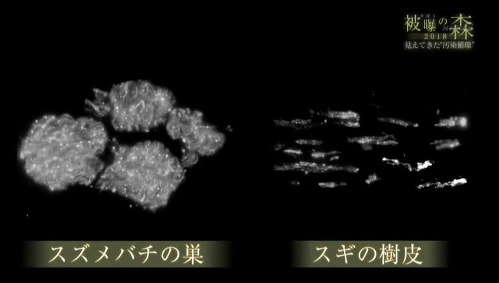 圖ㄧ:胡蜂的巢,與巢的材料、杉木樹皮在放射線像(呈現輻射的照片)下的樣子。