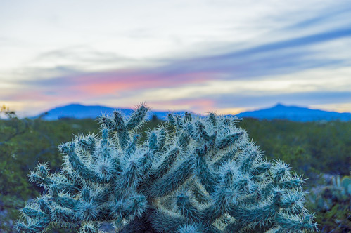 Cactus Sunrise | by aaronrhawkins