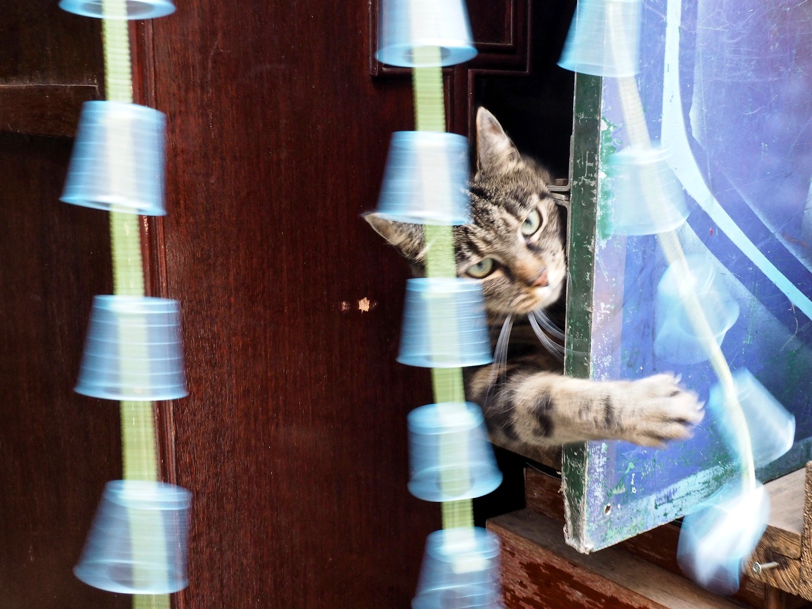 Street-Cat (Gänge) | by dongbide