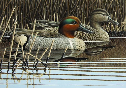 Image of winning entry for 2018 Migratory Game Bird Stamp Design Contest, Silent Repose by Paul Bridgford