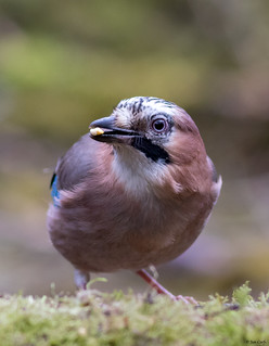 Jay | by jancphotography.be