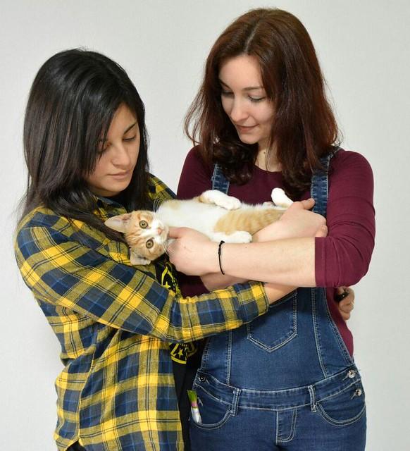 Rusty, gatito blanco y naranja adorable nacido en Diciembre´17, en adopción. Valencia. ADOPTADO. 41196813551_3b1d5f0d01_z