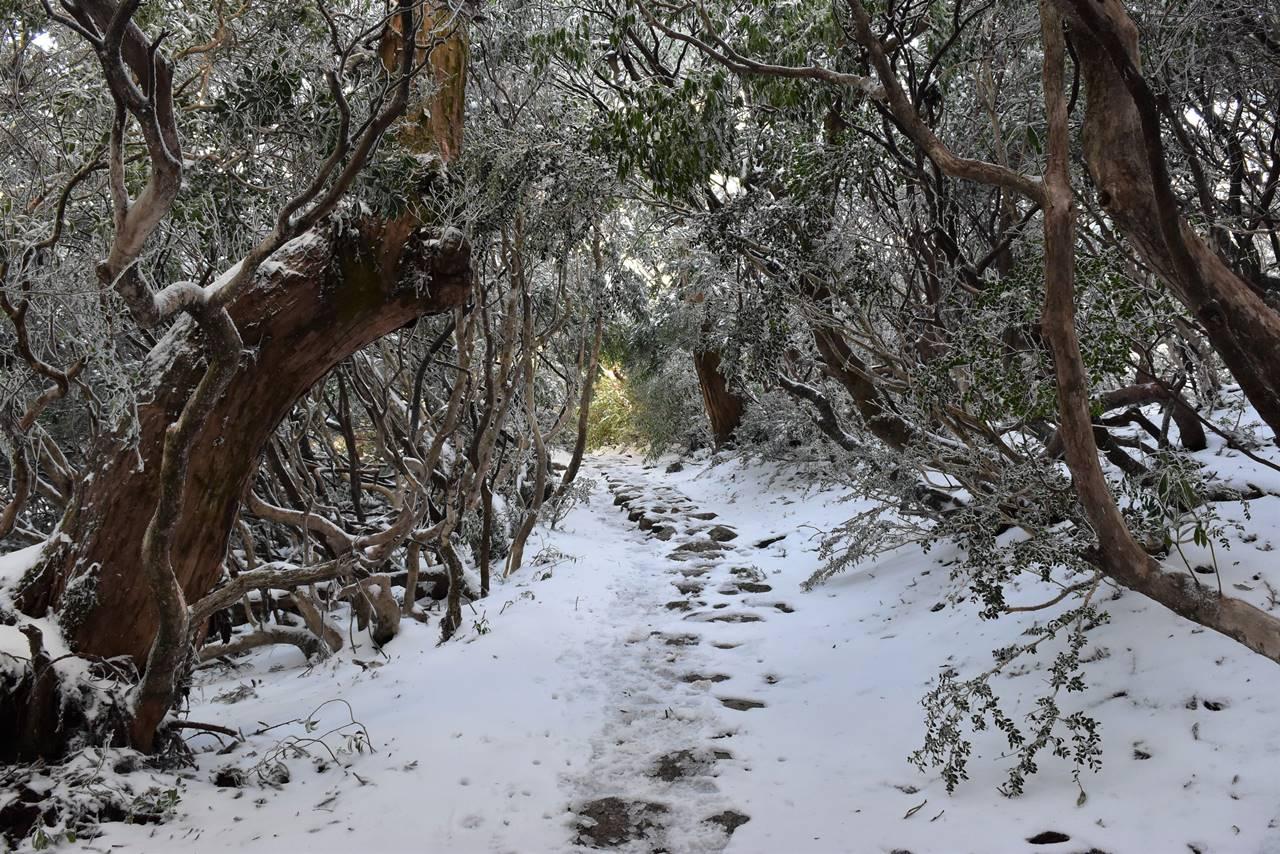 宮之浦岳登山 雪のトンネル