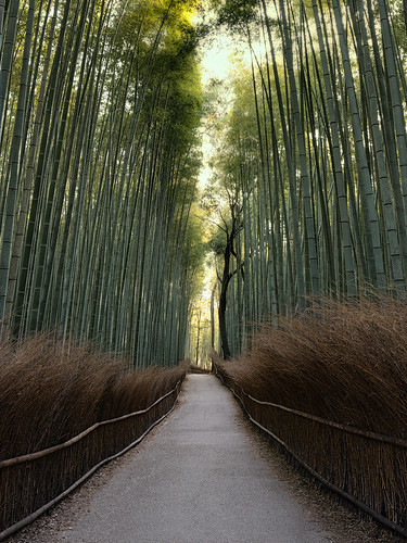 arashiyama bamboo grove how to get there