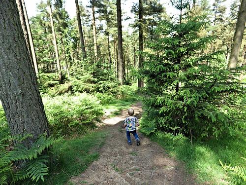Descending through woodland