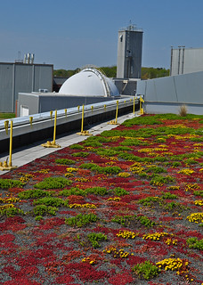 Green Roof (6) | by A Tidewater Gardener