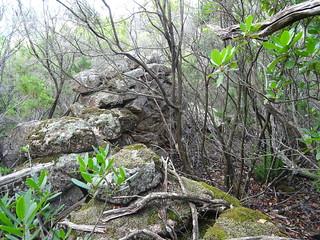 Dans la descente après Livisani : les ruines de la bergerie de Strascinedda