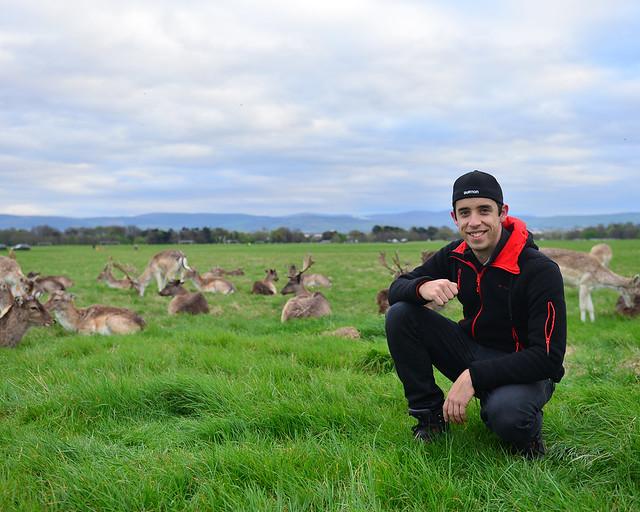 Diario de un Mentiroso con los ciervos del parque Phoenix de Dublín