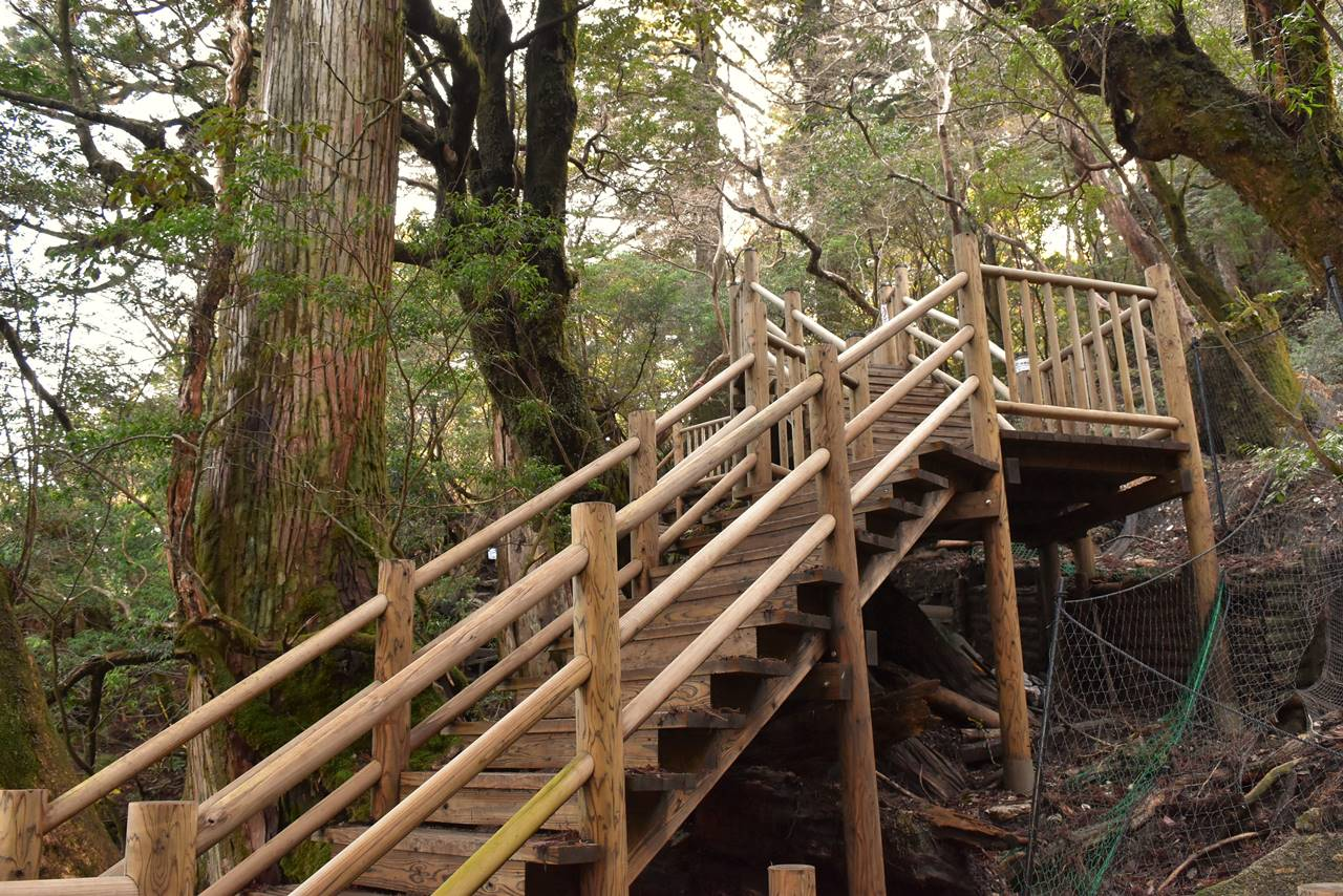 縄文杉のウッドデッキ