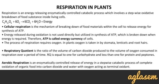Important Notes of Biology for NEET: Respiration In Plants