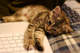 Fact: Kitten loves MacBook | by Ryan Forsythe