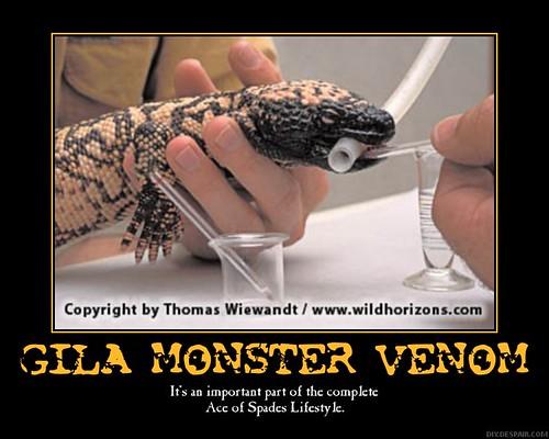 Gila Monster  Heloderma Suspectum Stock Photo  Image of