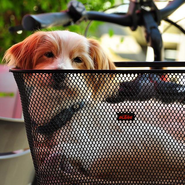 Butterbrezel-Frühstück im oberbayrischen Tittmoning --- Wir werden von einem Hund im Fahrradkörbchen beobachtet ... Foto: Brigitte Stolle, Juni 2018