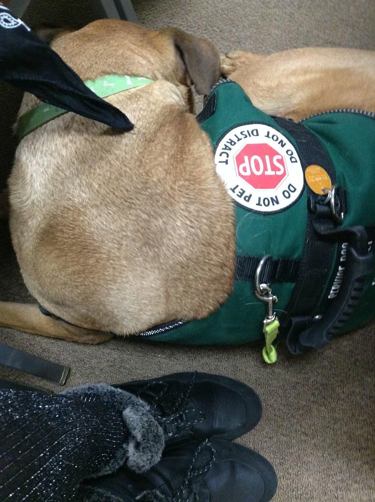 Kentucky Service Dog Association
