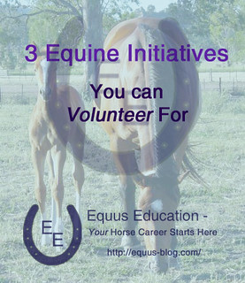3 Equine Initiatives You Can Volunteer For | Equus Education