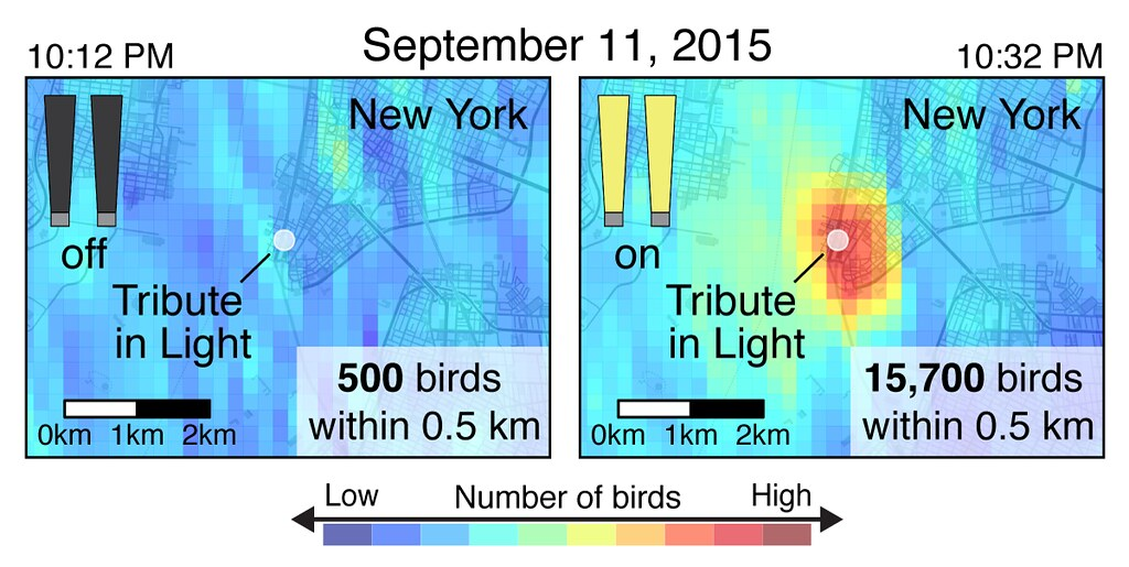 2015年9月11日晚上10點在關閉燈光20分鐘前後的鳥群分布狀況。圖片來源:康奈爾鳥類學實驗室。