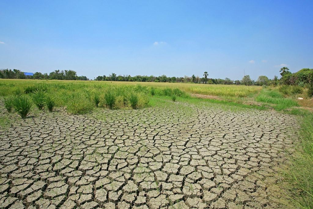 泰國的土壤劣化。圖片來源:Blanscape/Shutterstock.com