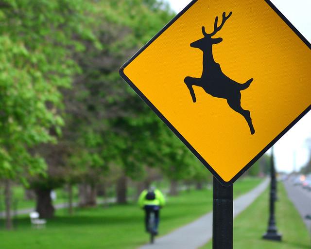 Cartel de ciervos en el Phoenix Park de Dublín