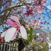 Up close and personal with our magnolia tree