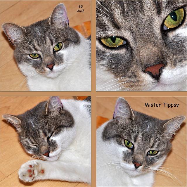 """Urlaubsbekanntschaft: Katze """"Mister Tippsy"""", Chieming am Chiemsee 2018 ... Foto: Brigitte Stolle"""