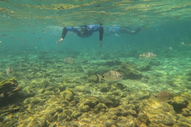 Haciendo snorkeling en la playa de Las Canteras
