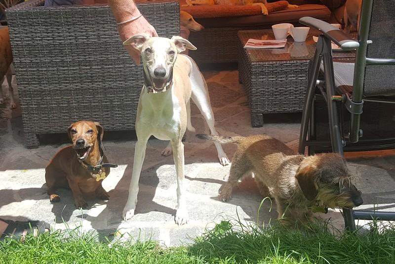 Akai mit Ludwig (links) und Lisbezh (rechts) noch bei uns zuhause.