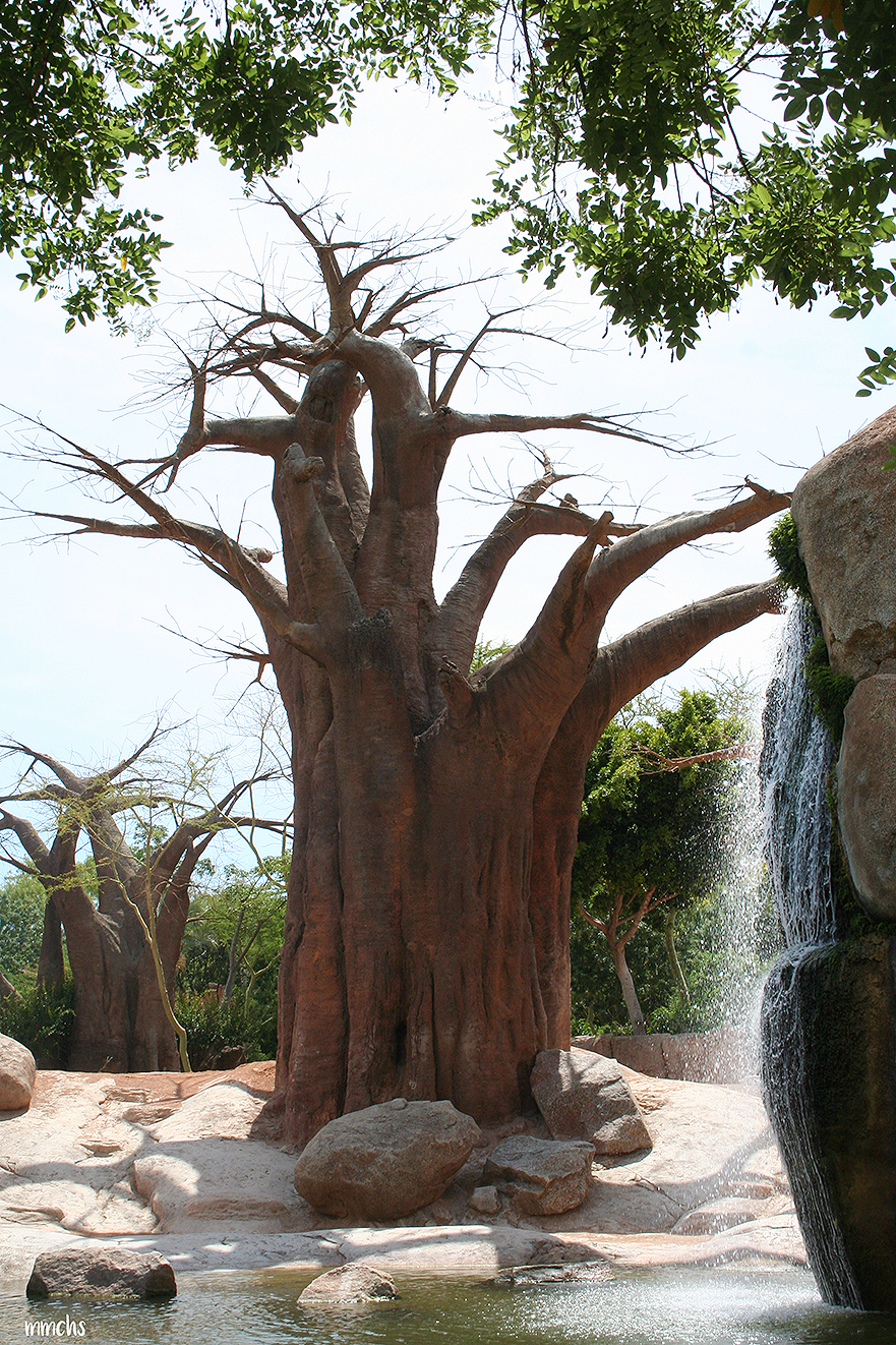 baobab escultura