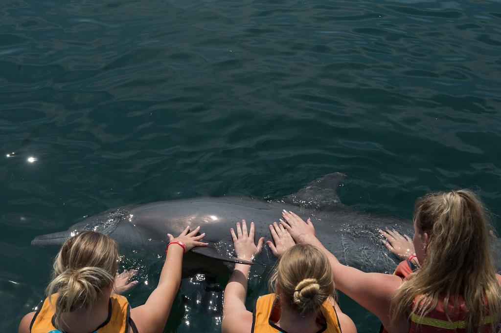 Dolphin Lodge - Serangan