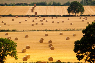 English Harvest | by pdam2