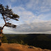 Lonely Pine on Indian Fort Mountain