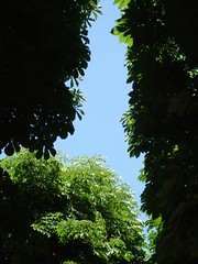 Arbre au jardin du luxembourg morganec corinne for Arbres jardin du luxembourg
