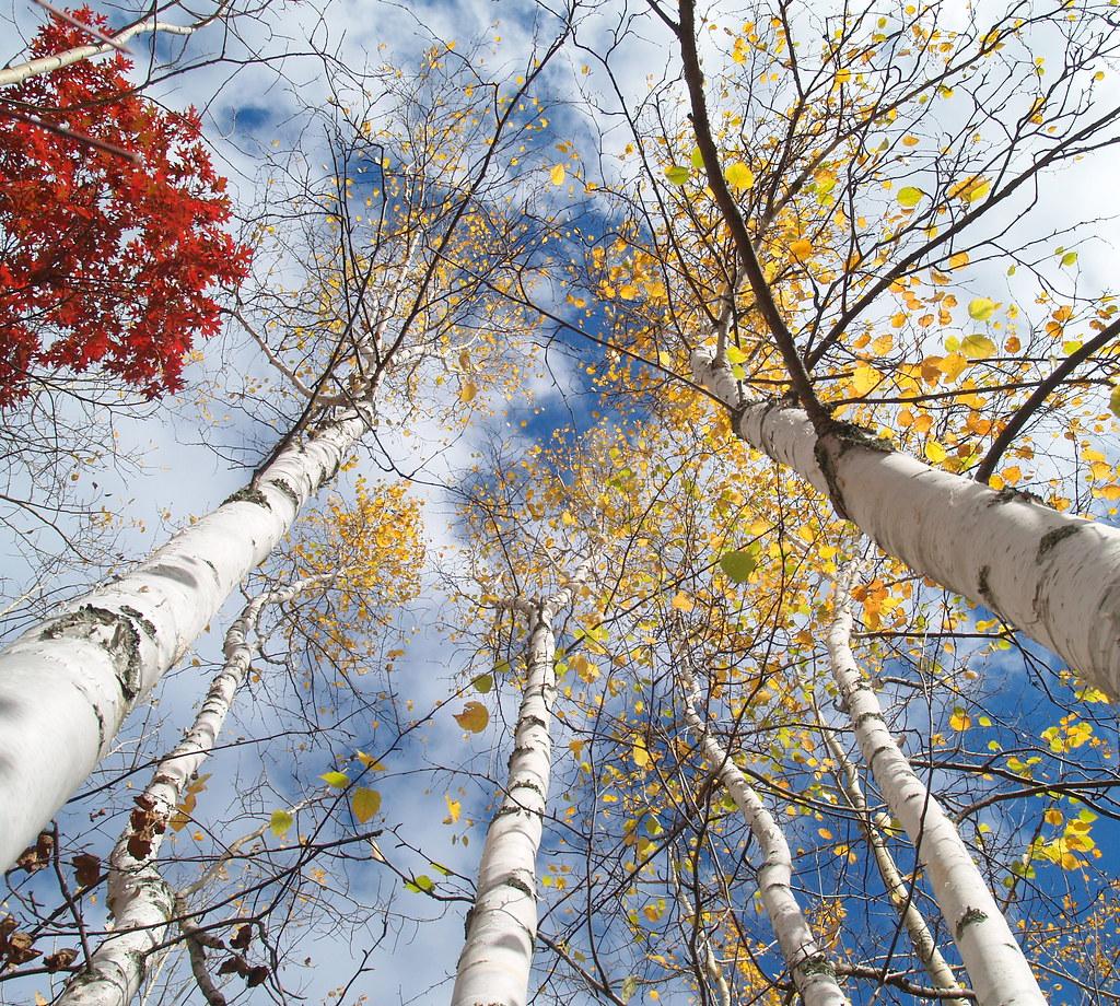I Think Autumn In Minnesota Is A Bit Like Mardi