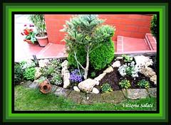 L estate e un disastro per il mio giardino fa molto caldo la